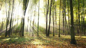 Schonen Sie unsere Umwelt